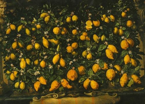 Bartolomeo Bimbi Limoni Poggio a Caiano
